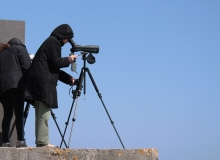Birdwatching in Estonia